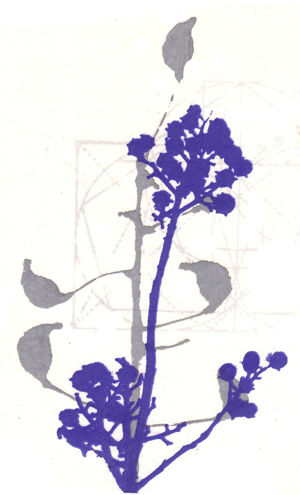 Blå blomma 4-.jpg
