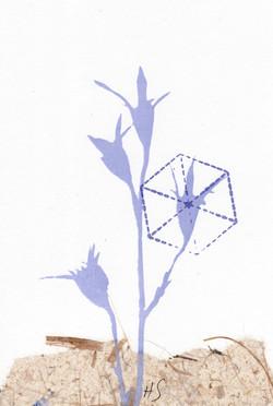 Card blue flower-.jpg