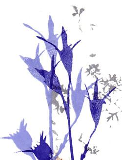 Blå blomma 2 coupe-.jpg