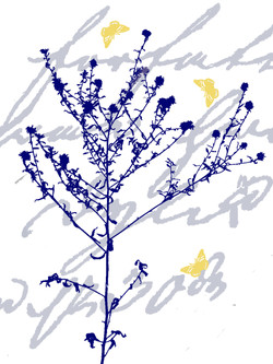 Fönsterbonad_1_BLÅ_vild_plant_platt_gula_fj-.jpg