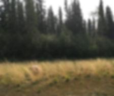 Wild Awakening - Yukon River_Photo Proje