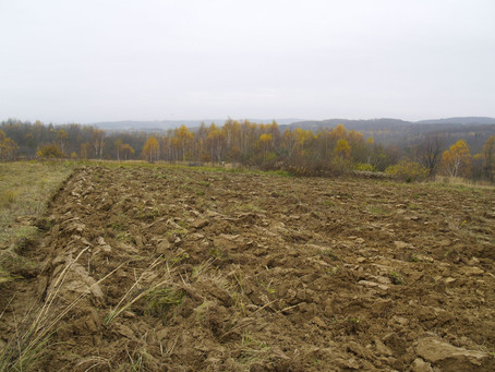 The manure, the ploughing and the last freeman of Yavornik