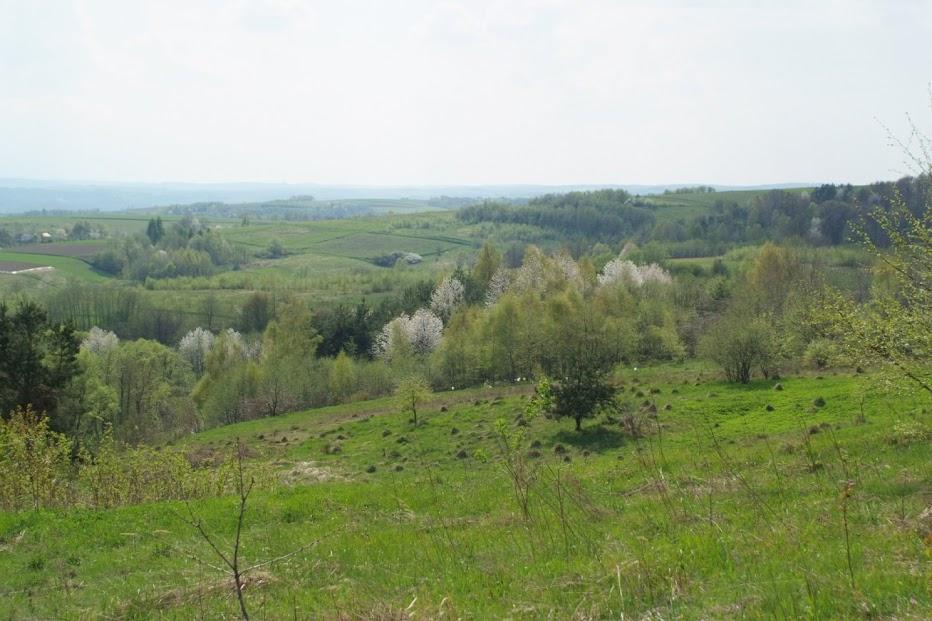 spring blossom farm