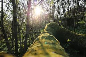 moss, log, sun