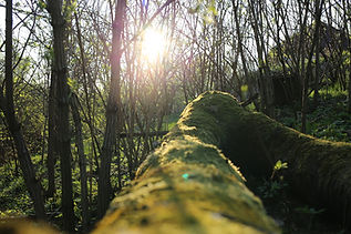 moss, log, sunlight