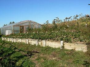 permaculture garden, greenhouse