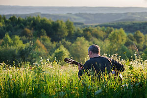 meadow, guitar,view, trees