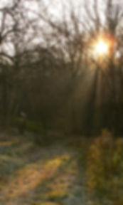sunlight, woods,path