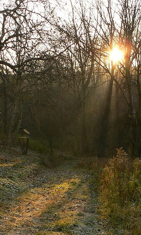 sunlight, woods,path