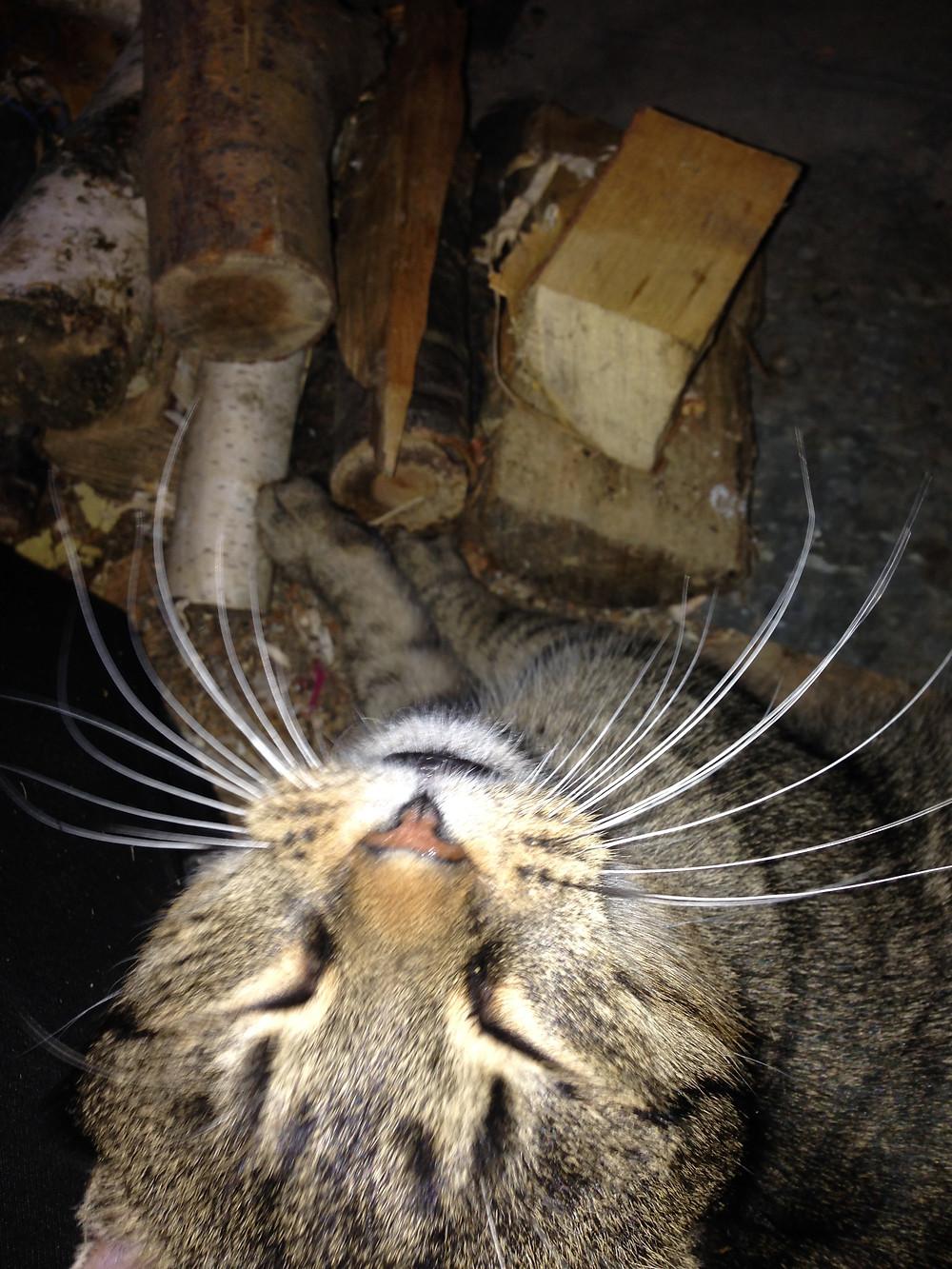 cat, fireside