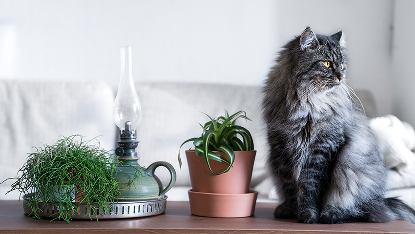 non toxic and cat friendly plants for cats
