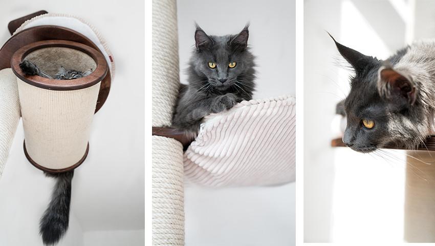 Kratzbaum Deckenspanner für große Katzen