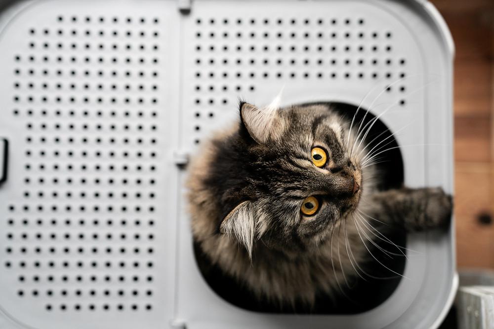 modkat-katzentoilette-große-Katzen