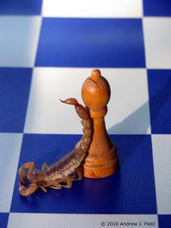 Scorpion-Horus Gambit