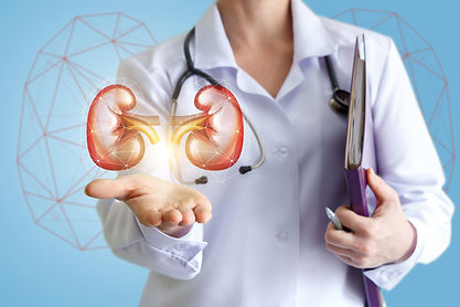 Doctor Shows Healthy Kidneys..jpg