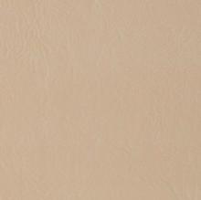 Sand-Dollar-513903