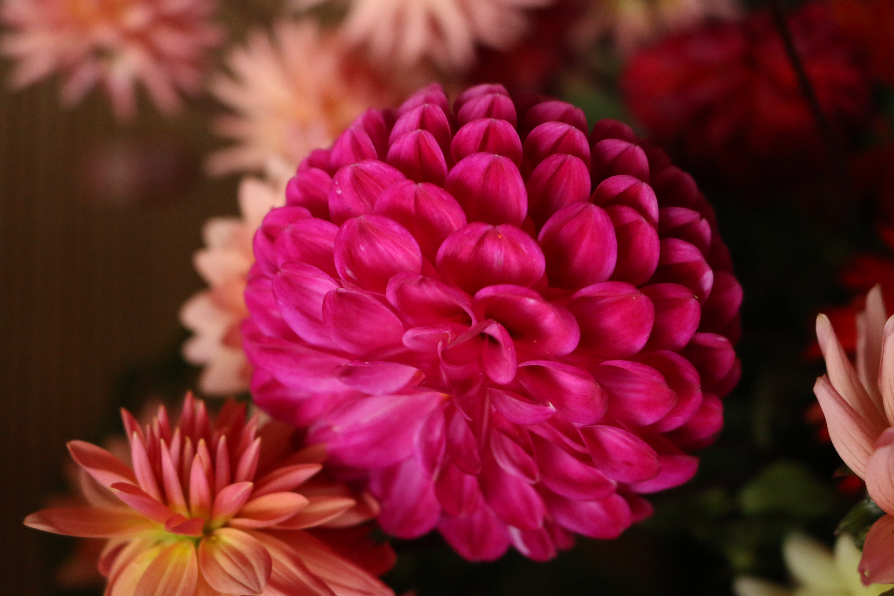 Flower power 5
