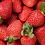 Thumbnail: Alabama Strawberry