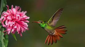 The hummingbird symbolizes joy.