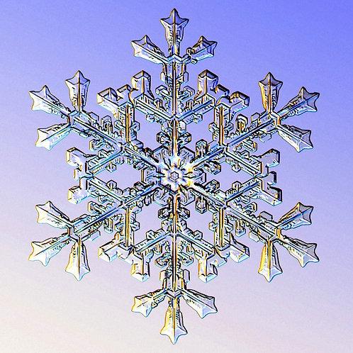 Secret Snowflake Sweatshirt