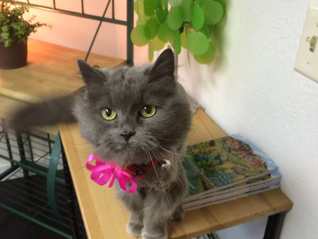 Cat Grooming Q & A