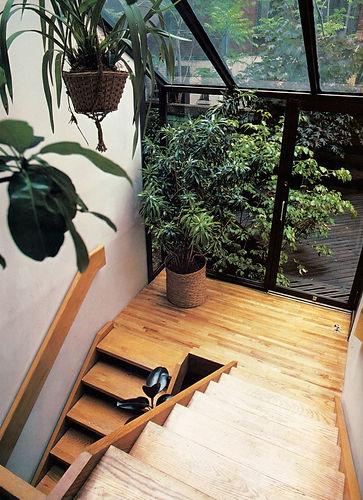 stairwell w plants.jpg