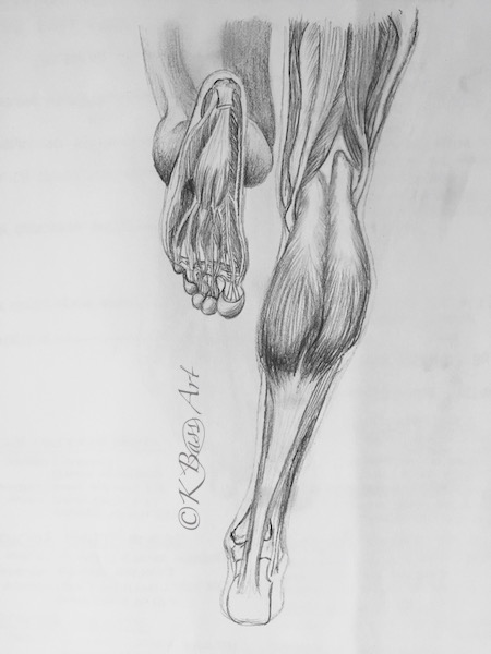 Running Legs Anatomy Sketch