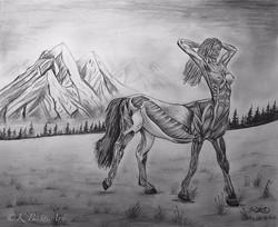 Centaur Anatomy