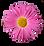 rose Daisy