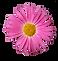 margarita rosa