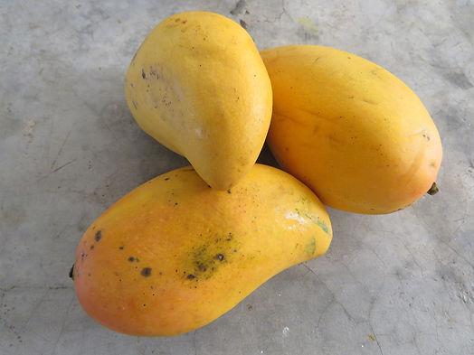 Organic Mangoes Hyderabad