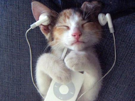 מוזיקת חתולים מרגיעה במיוחד
