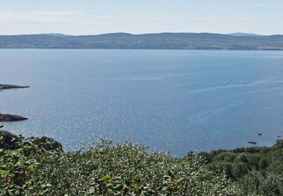 Whiddy Island.jpg