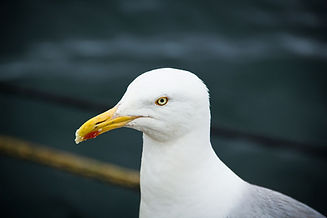 birdwatchingwestcork.jpg