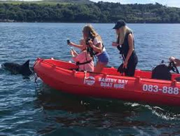Boats, Dolphins, Bantry, West Cork, Boat Hire