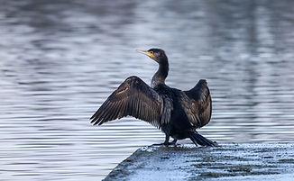 birdwatchingireland.jpg