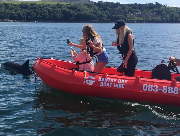 Dolphin Watching Bantry