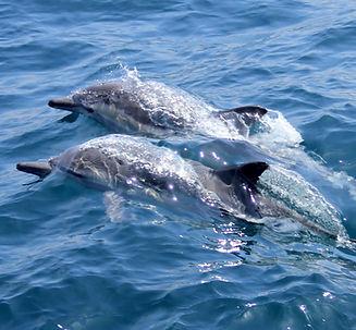 dolphinwatchingwestcork.jpg