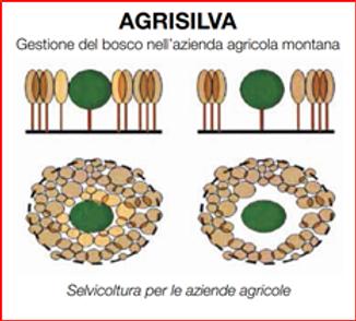 locandina Agrisilva