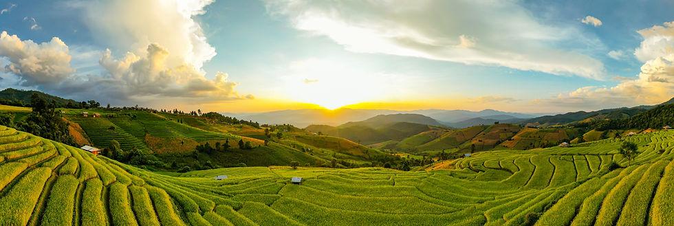 sunlight-twilight-rice-farm-landscape-pa