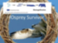 Osprey Survivor.jpg