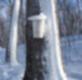 Image of a Sap Bucket