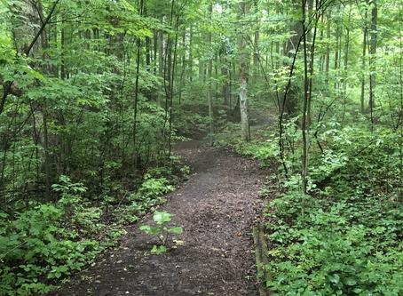 Purple Woods Conservation Area Scavenger Hunt Through the Seasons