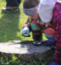 Image of Students Investigating a Tree Stump