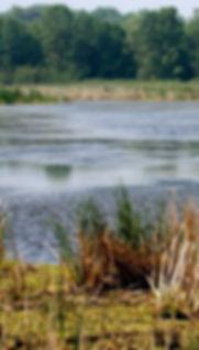 Image of Marsh