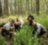 Image of Students Removing Garlic Mustard
