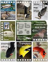 bird guide.jpg