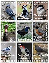 bird guide 1.jpg