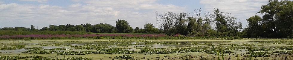 Image of Wetland