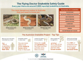 Snakebite Safety Guide